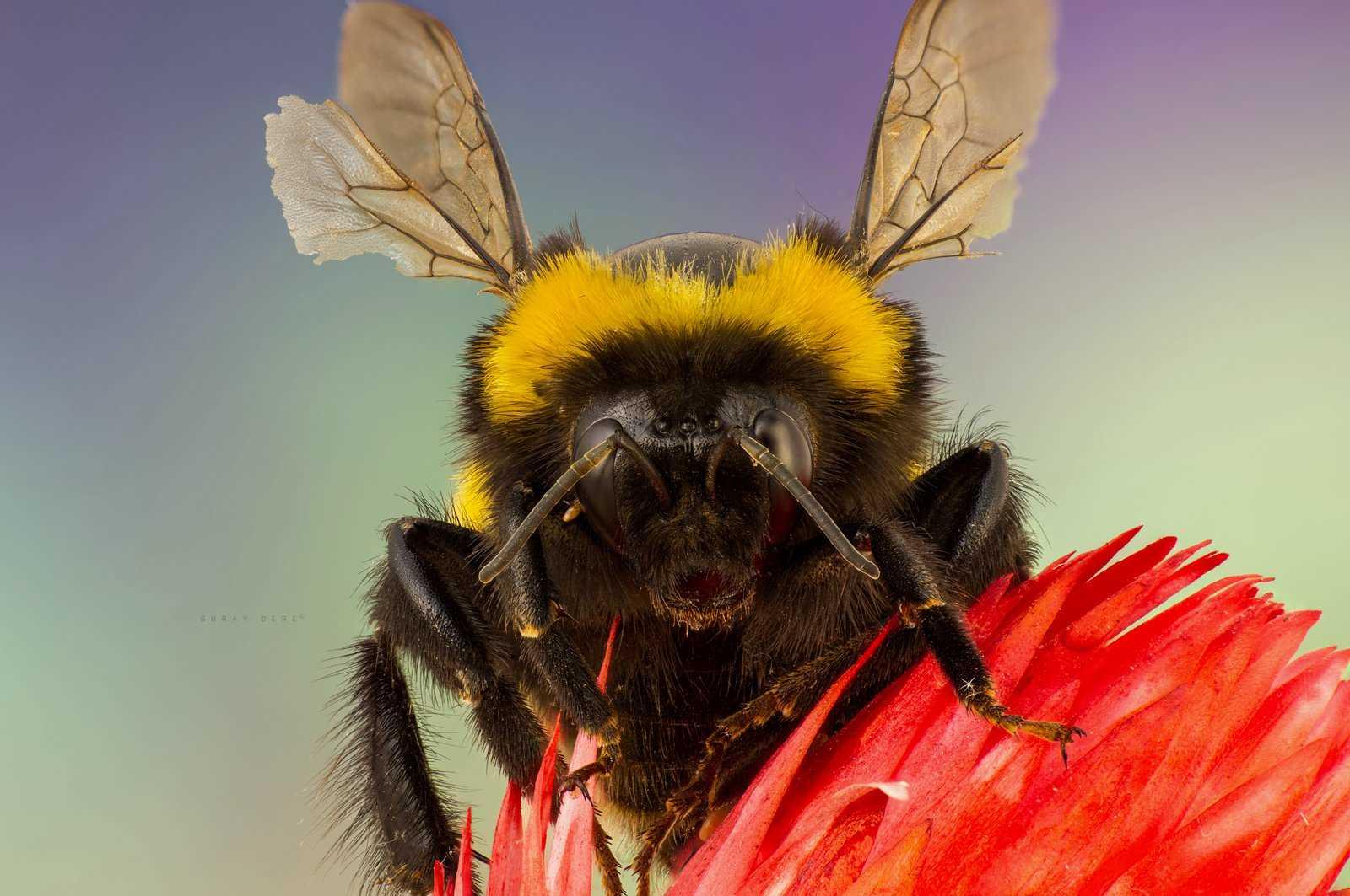 Weevils: Bahçe zararlıları ile nasıl başa çıkılır 53