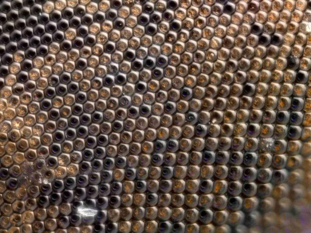 13.5X sinek gözü crop