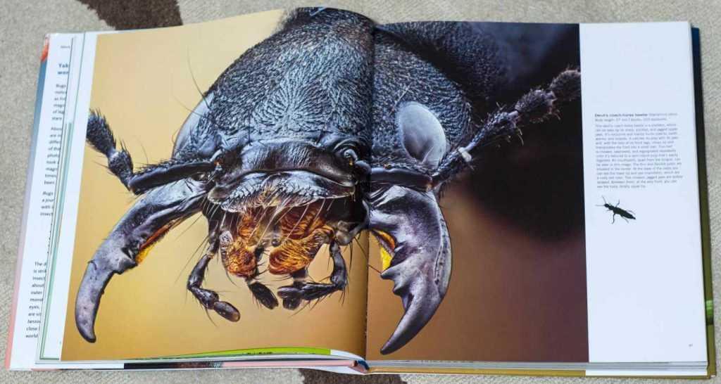 Bugs_Up_Close_1