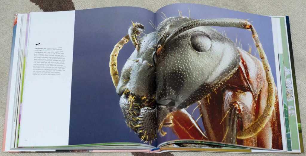 Bugs_Up_Close_2