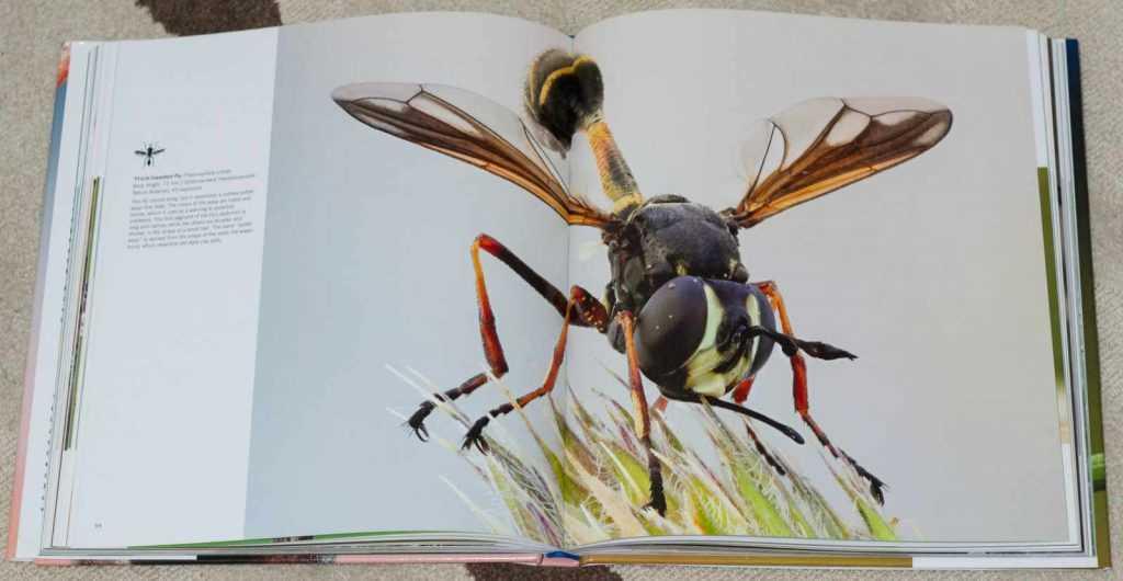 Bugs_Up_Close_4