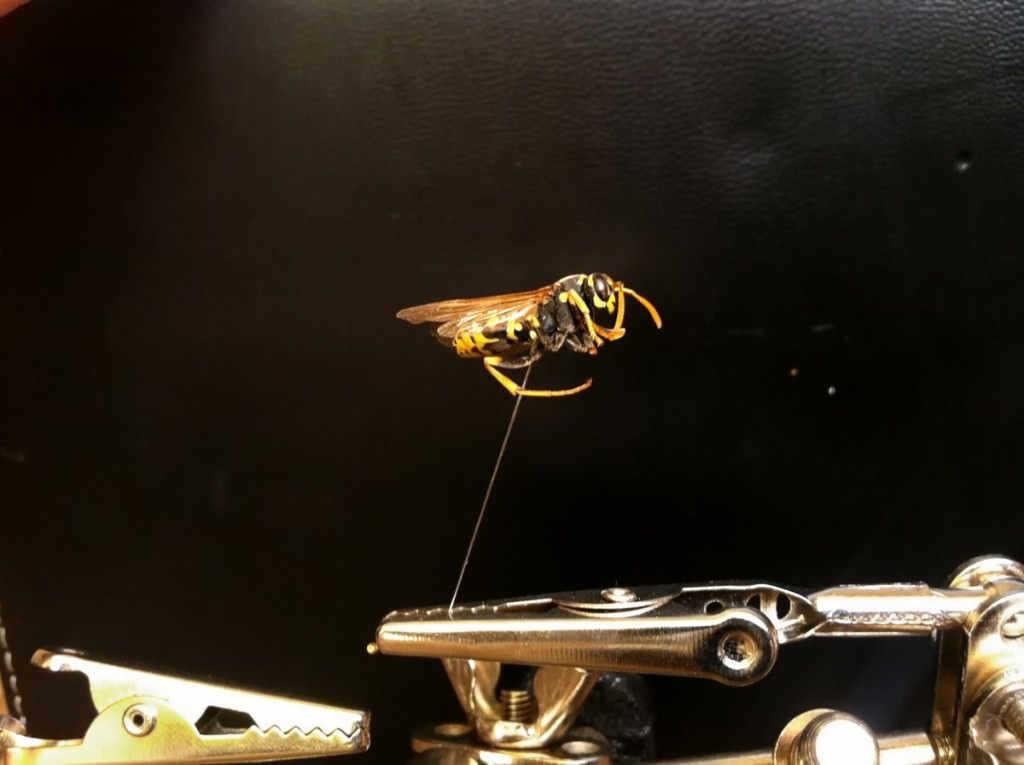 Cep-Telefonu-Kendi-Lensiyle-Makro-Fotograf-Testi