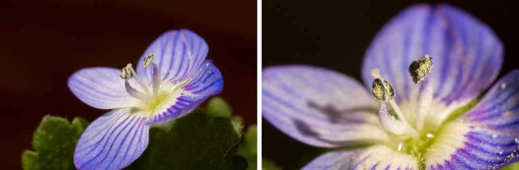 Pentax 50mm makro uzatma tüpü ile örnek fotoğraflar