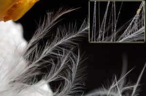 Tamron-90-Feather