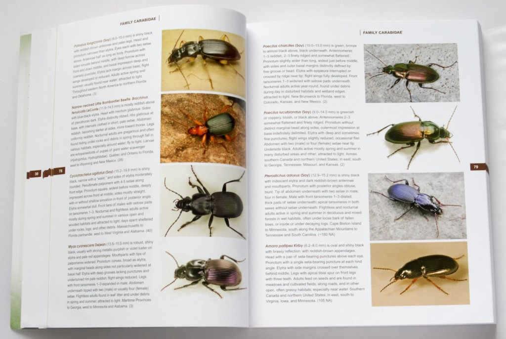 beetles_of_america_3