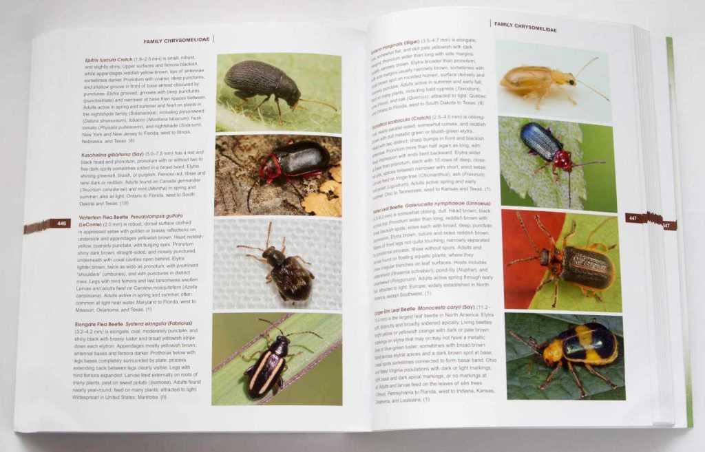 beetles_of_america_4