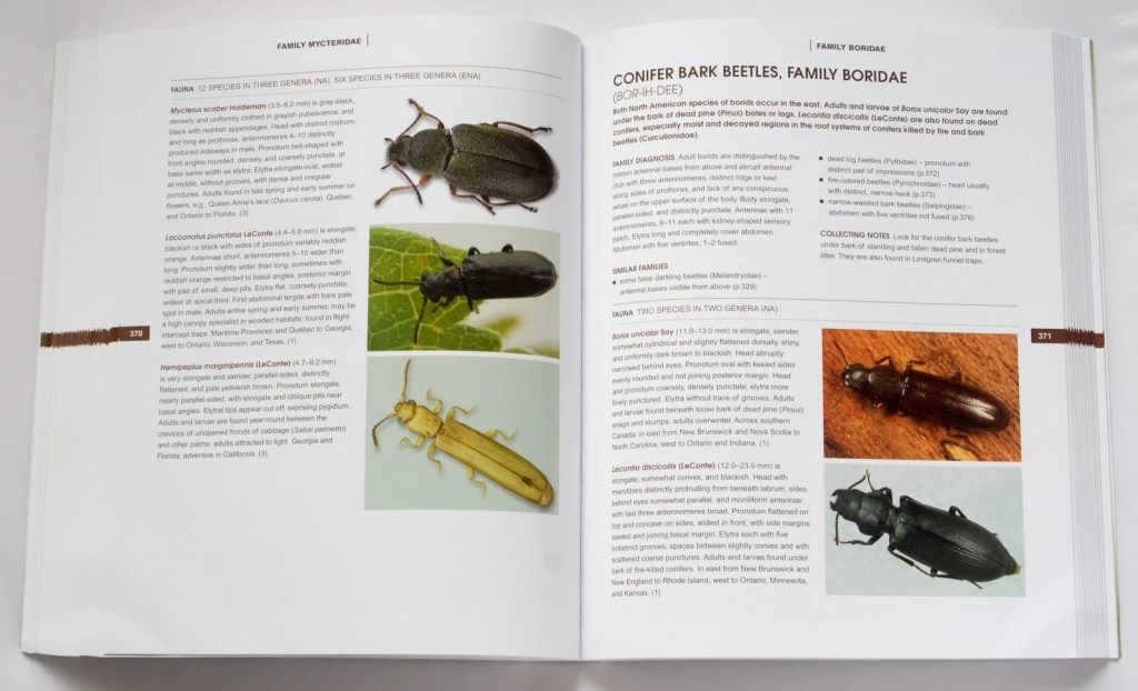 beetles_of_america_5