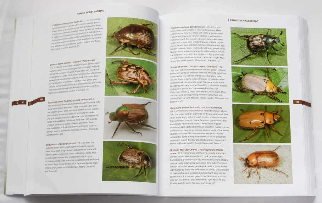 beetles_of_america_6