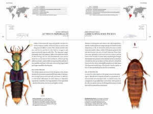 book_of_beetles_3