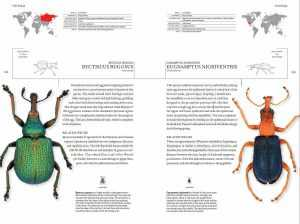 book_of_beetles_4