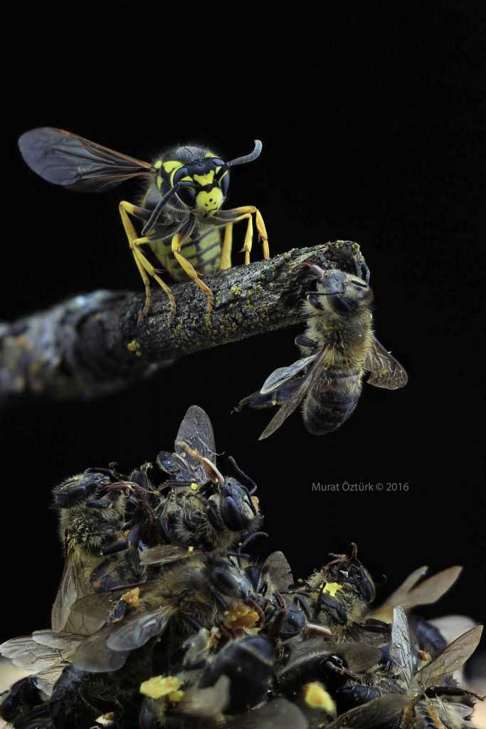 insect-wars