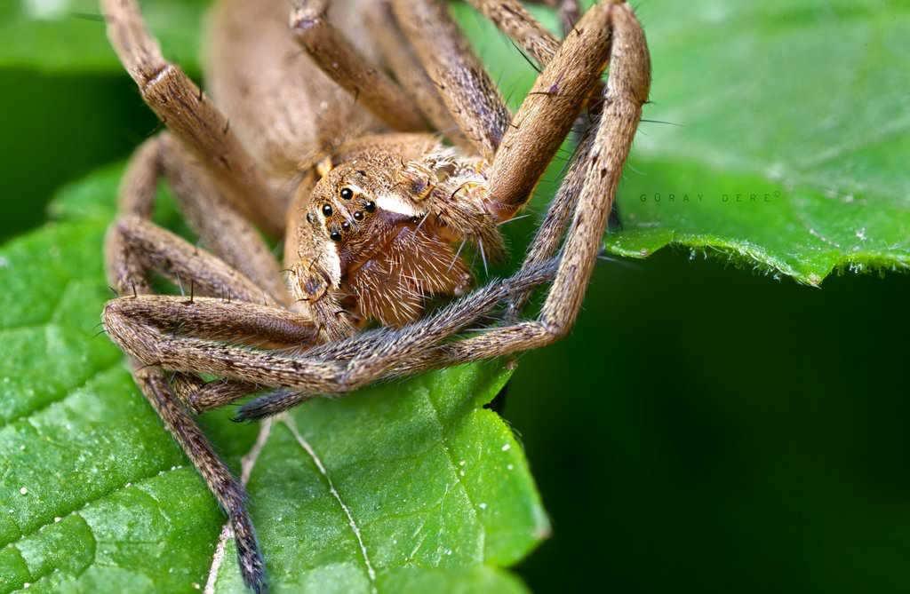 makro-örümcek-fotoğrafı