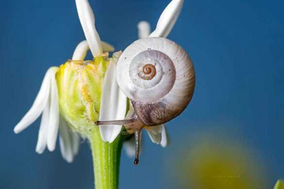 makro-bocek-fotografi-salyangoz-snail-tamron-90mm