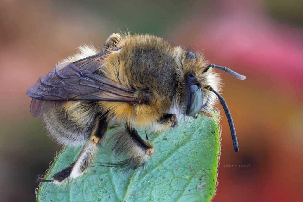 Doğal ışık makro arı fotoğrafı
