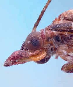 makro çekim böcek otamat101 flash