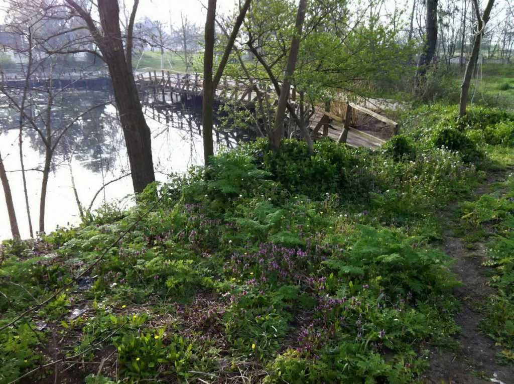 Yeşil alana bir de küçük gölet eklenince makro için çok uygun bir ortam oluşuyor.